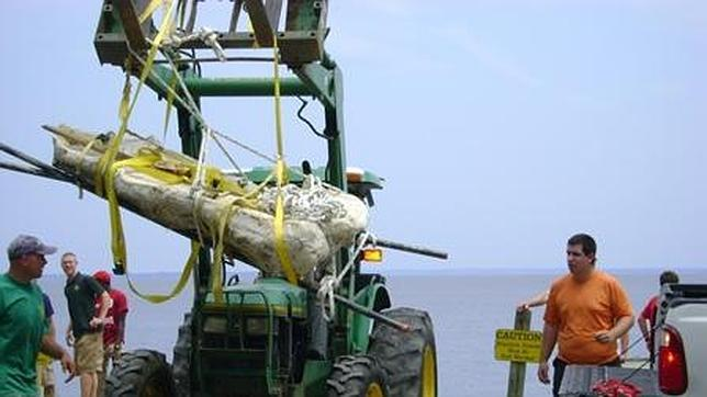 Desentierran el cráneo de una ballena de más de 15 millones de años de antigüedad