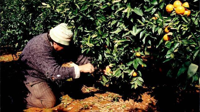 El número de agricultores y ganaderos autónomos se triplica desde el comienzo de la crisis