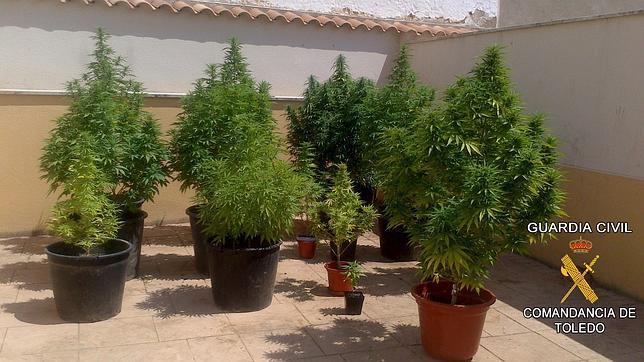 Detienen A Tres Personas Por Cultivar Marihuana En Turleque