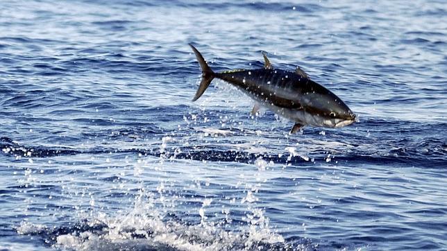 La contaminación de peces del Pacífico con mercurio aumentará las próximas décadas