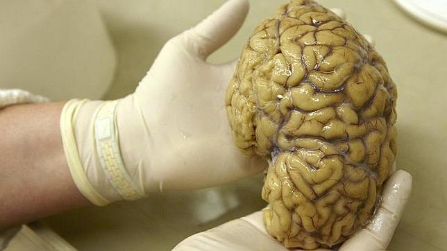 reuters Cuando los recuerdos están apoyados por una mayor coordinación entre las diferentes partes del cerebro, es una señal de que van a estar en la memoria durante más tiempo, explican los investigadores