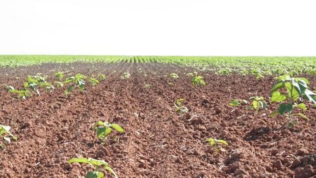El cambio climático favorece la propagación de plagas en los cultivos