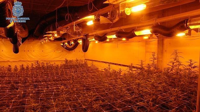 Desmantelan seis plantaciones indoor de marihuana y hongos alucin genos - Plantaciones de marihuana interior ...