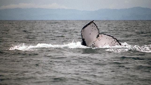 La cola de la ballena viajera, fotografiada por un turista noruego en aguas de Madagascar