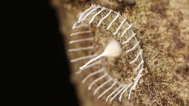 ¿Qué es esta extraña red hallada en el Amazonas peruano?