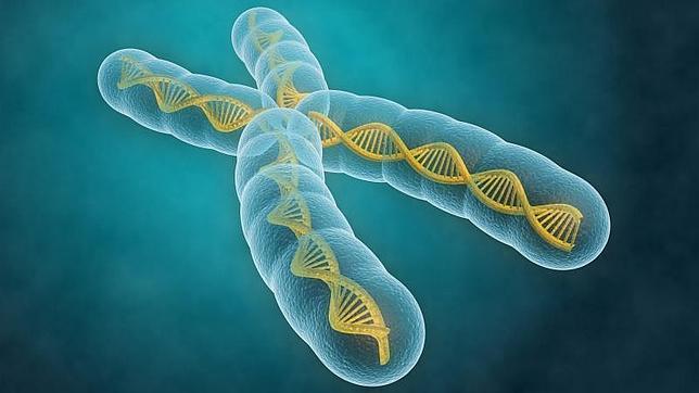 Desarrollo Academico De La Faciag Biologia Los Cromosomas