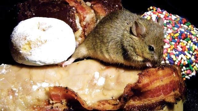 Descubren un grupo de neuronas que nos hacen comer en exceso