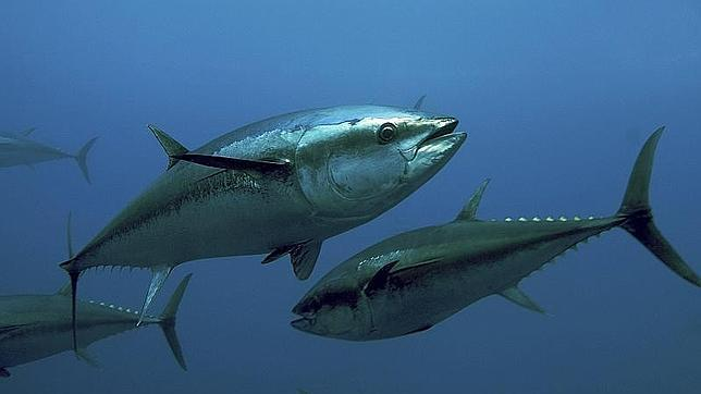 Más de la mitad de las mujeres españolas tiene altos los niveles de mercurio por el elevado consumo de pescado