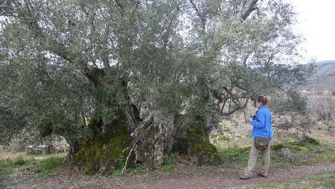 Los diez árboles que cautivaron a Félix Rodríguez de la Fuente
