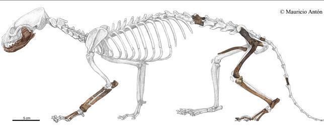 Una nutria de hace 9 millones de años, descubierta en Teruel