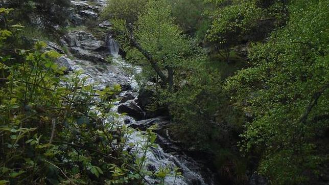 Los mejores sitios para buscar setas este otoño por Madrid