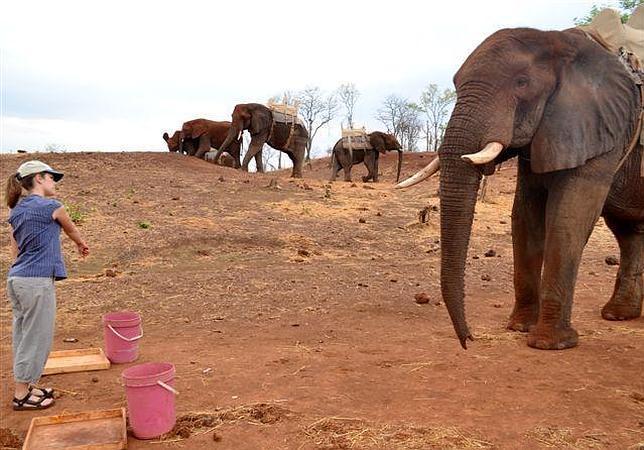 Los elefantes nos comprenden cuando señalamos algo