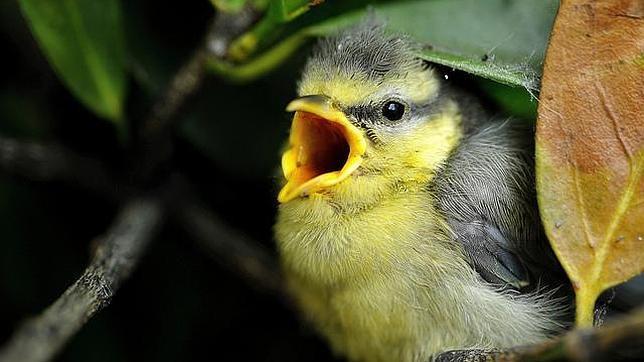 Los rboles env an se ales de auxilio a las aves cuando for Los arboles y sus caracteristicas