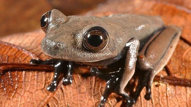 Descubren un paraíso perdido con 60 nuevas especies en la selva de Surinam
