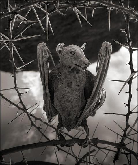 El inquietante lago que convierte a los animales en estatuas de sal Murcielago--478x570