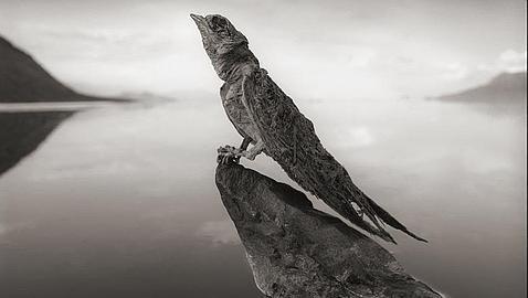 El inquietante lago que convierte a los animales en estatuas de sal Nick-3--478x270