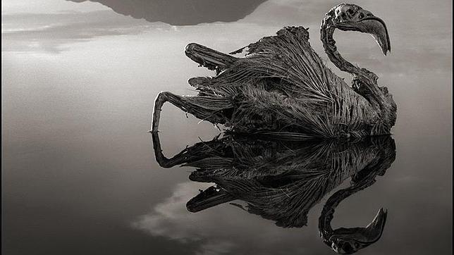 El inquietante lago que convierte a los animales en estatuas de sal Nick-5--644x362