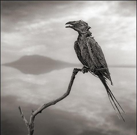 El inquietante lago que convierte a los animales en estatuas de sal