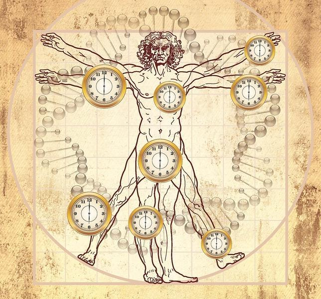 Científicos hallan el «reloj biológico» del envejecimiento