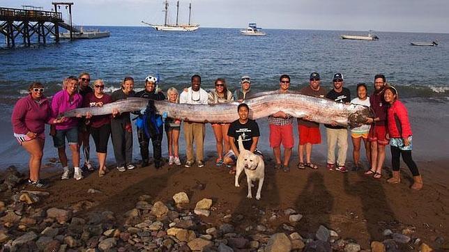 Monstruos marinos gigantes, el mito se hace realidad en California