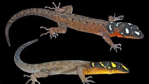 Descubren un mono que ronronea y 400 nuevas especies en un «edén» desconocido en el Amazonas