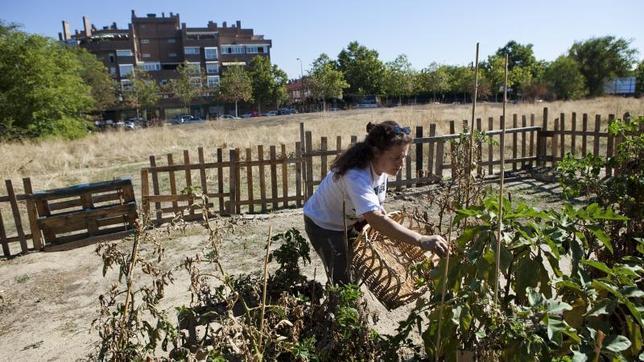 Los huertos urbanos, una tendencia en auge en Madrid