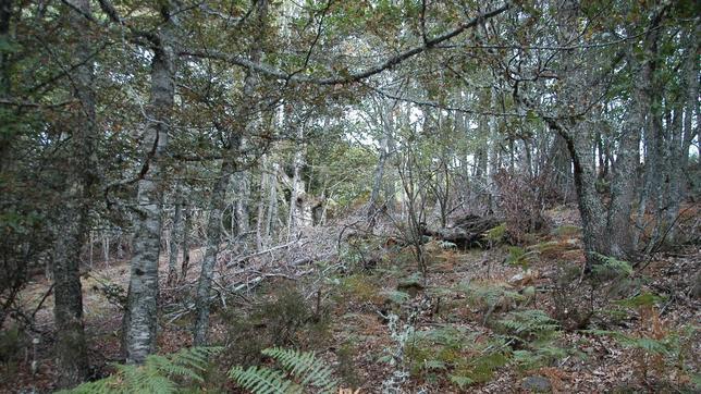 Las hayas y los robles albares reinan en el bosque de Hormas
