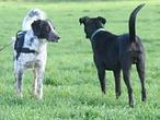 ¿Qué se dicen los perros al mover la cola?