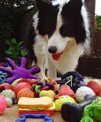 Ocho cosas sorprendentes que quizás no sepas sobre tu perro