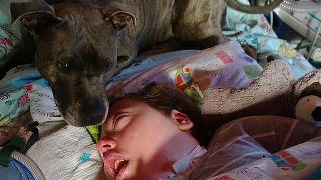 La conmovedora historia de una perra que visita cada mañana a un niño en coma