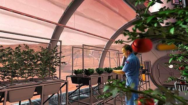 La NASA quiere plantar nabos en la Luna