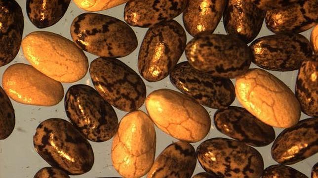 Las semillas de chía son ricas en omega-3 y compuestos antioxidantes