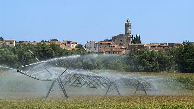 Un campo de maíz es regado esta tarde en Colomers (Girona)