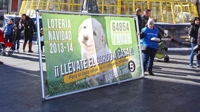 Lotería de Navidad 2013: La lotería que «toca» antes