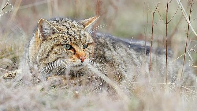 Los gatos fueron domesticados en China hace 5.300 años