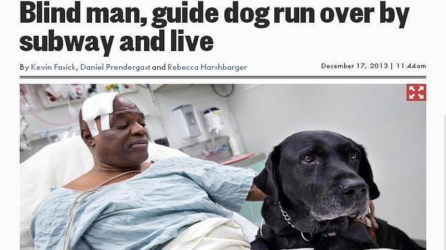 Orlando, un perro lazarillo convertido en héroe en Nueva York