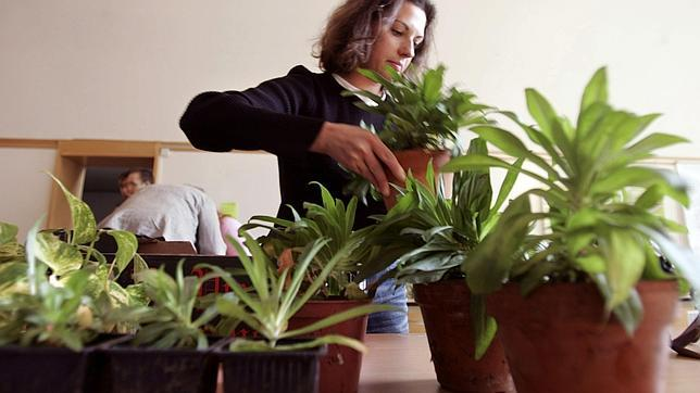 Las ondas de la conexión WiFi pueden matar a las plantas