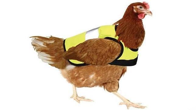 Abrigos para pollos y gallinas, la última moda el Gran Bretaña