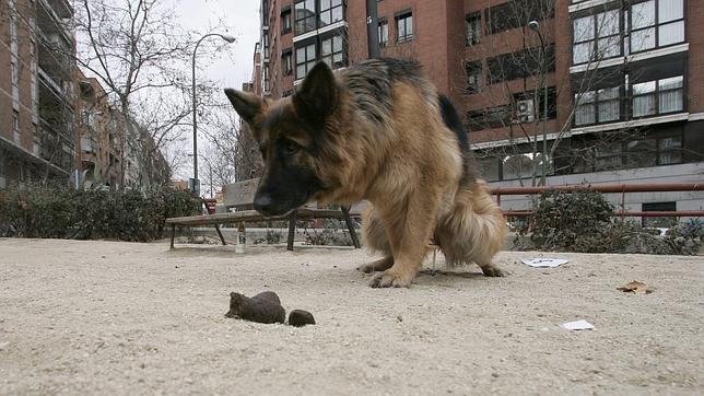 Los perros prefieren defecar alineados con el campo magnético de la Tierra