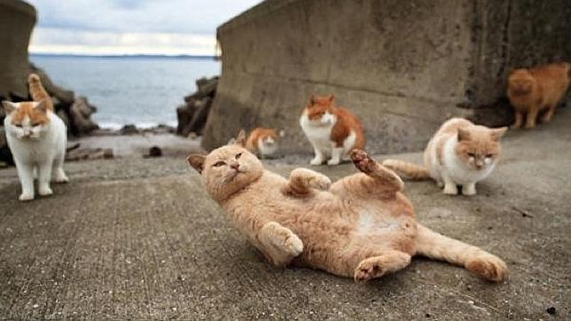 La desconcertante «Isla de los gatos» de Japón