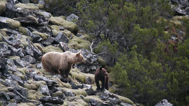 El vórtice polar sobre Estados Unidos despierta a los osos de Escandinavia