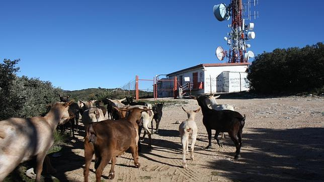 El Gobierno fuerza el cese de las emisiones de Catalunya Ràdio en la Comunidad Valenciana