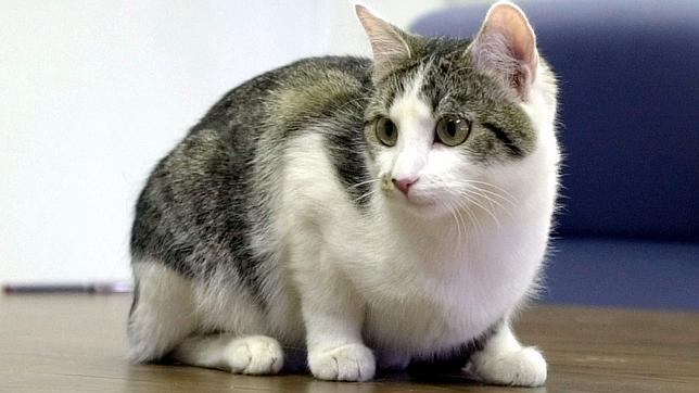 Tu gato te ve como un «minino grande»