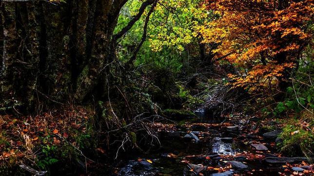 El otoño es la mejor época para visitar el Hayedo de Tejera Negra
