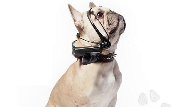 Desarrollan un aparato que traduce los pensamientos de los perros en palabras