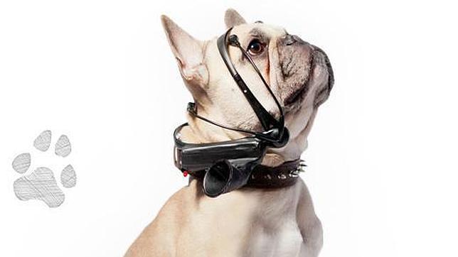 Un aparato «traduce» los pensamientos de los perros en palabras