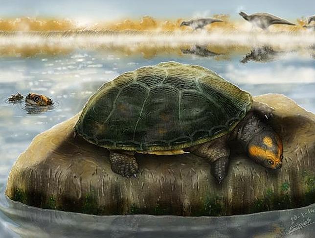 La tortuga de hace 125 millones de años que tomaba el sol en Castellón