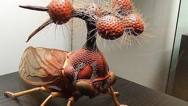 Los diez insectos más raros del mundo