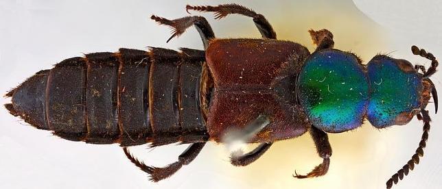 La especie Darwinilus sedarisi