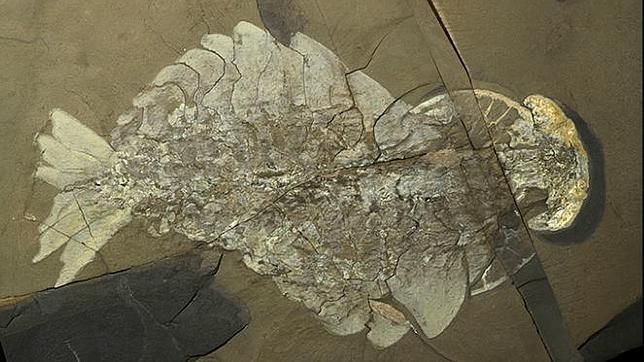 Desentierran en Canadá uno de los mayores «tesoros» fósiles del mundo